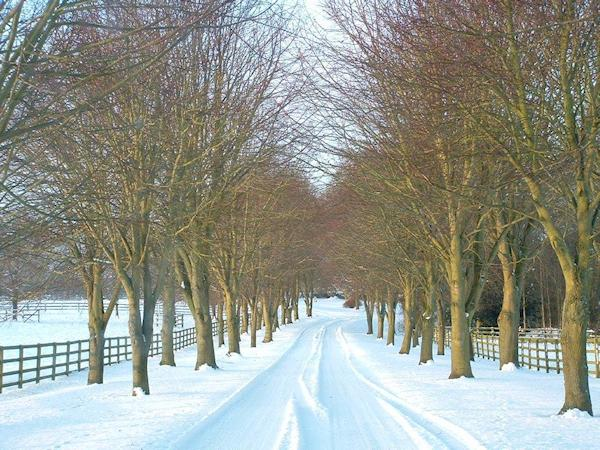 treelined-avenue-in-winter-roger-bailey