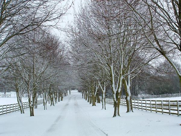 treelined-avenue-snow-silhouette-roger-bailey