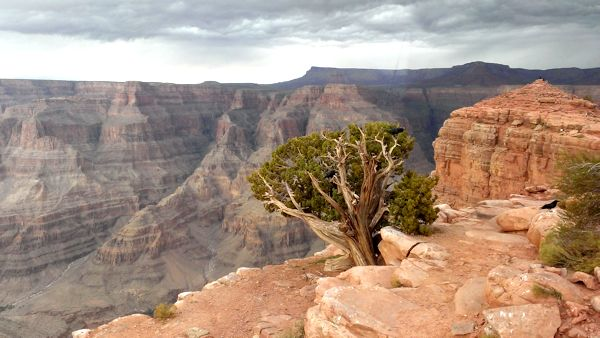 looking-over-the-grand-canyon-malcolm-stewart