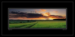 barley-sunset-rob-ferns